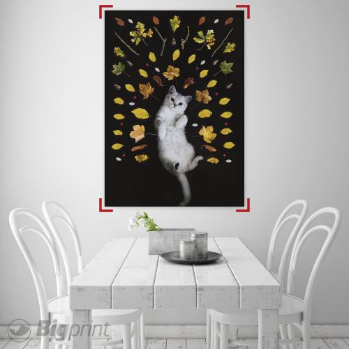 poster print of a playful cat