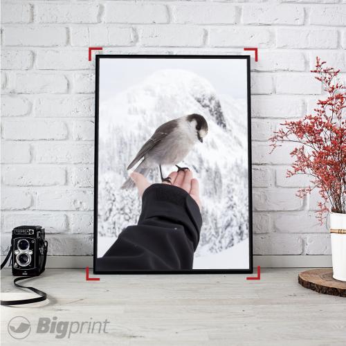framed art print of a hand holding a bird